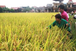 5 năm tái cơ cấu nông nghiệp: Nhiều kết quả ấn tượng