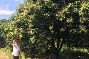Bắt đất 'nghèo' nuôi cây cho nông dân làm giàu
