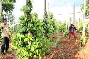 Đồng hành nâng cao chất lượng nông sản Việt