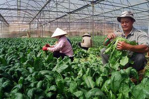 Cần thêm chính sách để doanh nghiệp mạnh dạn đầu tư vào nông nghiệp
