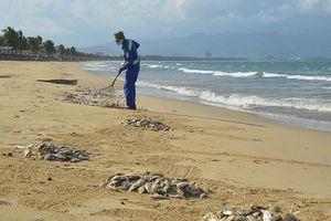 Hé lộ nguyên nhân cá chết dạt trắng bờ biển Đà Nẵng