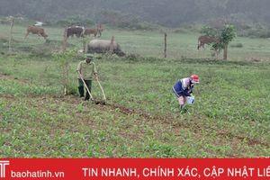 Vũ Quang tập trung chăm sóc và gieo trỉa 500 ha ngô vụ Đông