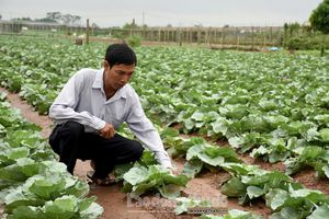 Ứng dụng công nghệ để phát triển nền nông nghiệp bền vững