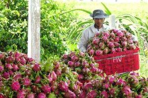 Giải bài toán phân phối nông sản - Bài 2: Tạo sự khác biệt sản phẩm để cạnh tranh
