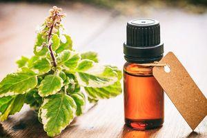 Các loại tinh dầu giúp giảm đau bệnh gút
