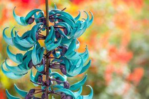 5 loại hoa kỳ lạ nhất hành tinh
