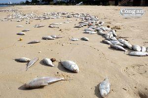 Xác minh nguyên nhân cá chết dọc bờ biển Nguyễn Tất Thành