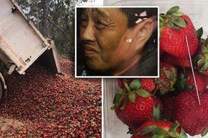 Nghi phạm gốc Việt cài kim khâu vào dâu tây không được tại ngoại