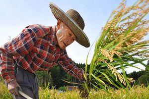 Nhật Bản thiếu nông dân