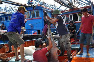 Gỡ 'thẻ vàng' cho xuất khẩu thủy sản: Cần xây dựng nghề cá có trách nhiệm
