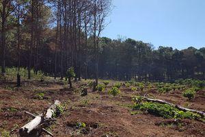 Gia Lai: Cán bộ phá rừng phòng hộ, chiếm đất làm rẫy