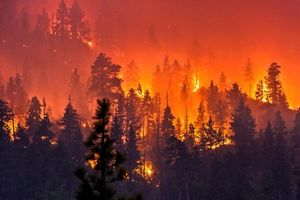 Cháy rừng khủng khiếp ở California, ít nhất 25 người chết
