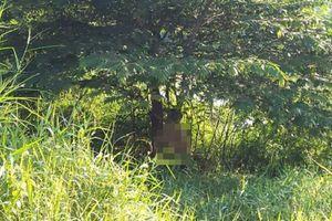 Thi thể người đàn ông trong tư thế treo cổ trên cành cây