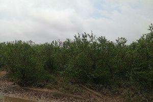 Ổ bạc chui vào rừng ngập mặn sát phạt