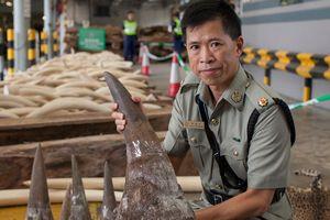 Trung Quốc tạm cấm buôn bán hổ, tê giác