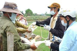 Bình Định 'phòng thủ' dịch cúm gia cầm