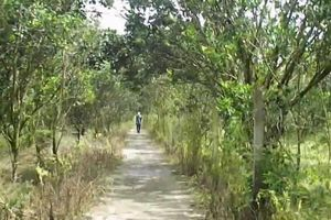 TT-Huế: Nam thanh niên chết gục trong vườn bưởi