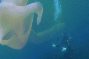 Video 'sâu biển' khổng lồ dài 8m khiến thợ lặn kinh ngạc