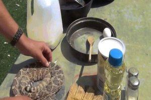 Mỹ: Bị rắn cực độc cắn, 1 tháng sau trả thù bằng cách nấu con khác để ăn