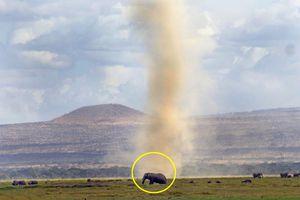 Cảnh voi khổng lồ 'cực ngầu' chứng tỏ đẳng cấp