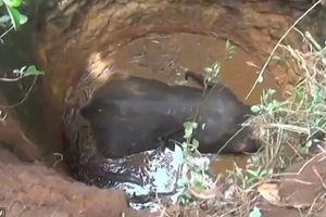 6 giờ nỗ lực giải cứu voi con bị rơi xuống giếng sâu 9 mét