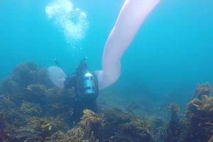 Thợ lặn đối diện giun biển khổng lồ giữa lòng đại dương