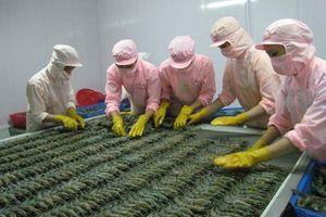Khảo sát đánh giá chất lượng doanh nghiệp Việt Nam hội nhập CPTPP: Công ty Cổ phần chế biến thủy sản xuất nhập khẩu Âu Vững I