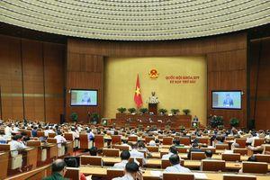 Quốc hội nghe các Báo cáo thẩm tra công tác tư pháp