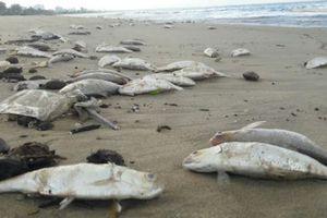 Không còn tình trạng cá chết trên bờ biển Đà Nẵng