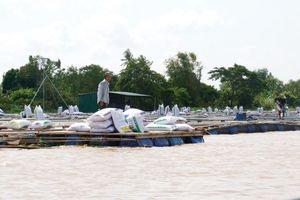 Tác động từ nuôi thủy sản đến chất lượng nước mặt