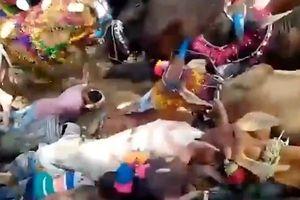 Nghi thức lạ: Để đàn bò giẫm qua chục người đến bị thương