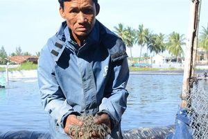 Gần triệu con tôm nghi bị đầu độc: Diễn biến mới