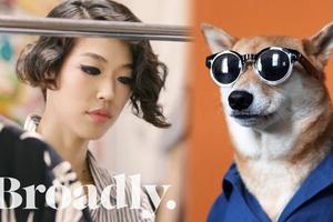 'Siêu mẫu' chó Bodhi cực 'ngầu' với mức lương 15.000 USD/tháng