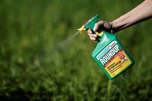 Hàng ngàn người kiện Monsanto bán thuốc diệt cỏ gây ung thư