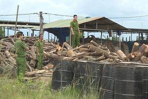 Đắk Lắk: Phát hiện bãi gỗ khủng không rõ nguồn gốc trong lò than
