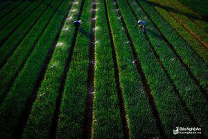 Thời tiết 14/11: Bắc - Trung - Nam đều có mưa rải rác, mưa rào và dông