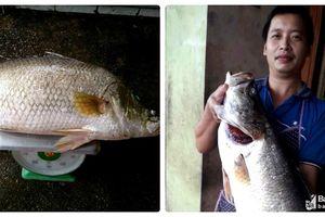 Nghệ An: Bắt được cá vược 'khủng' ở lòng hồ thủy điện Hủa Na