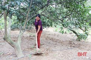 Sau thu hoạch, nông dân Hà Tĩnh tất bật chăm sóc cây bưởi