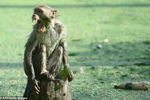 Bé 12 ngày tuổi tử vong sau khi bị khỉ cướp từ tay mẹ