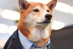 Chó thời trang Bodhi cực 'ngầu' với mức lương 15.000 USD/tháng
