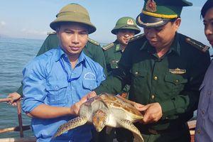 Đồi mồi 15 kg mắc lưới ngư dân được thả về biển