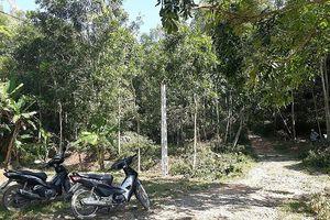 'Xẻ thịt' rừng đặc dụng, thi công đường điện trên đất công trái phép
