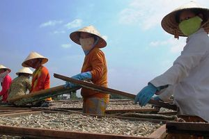 Phát hiện sản phẩm khô biển có chất gây hại sức khỏe