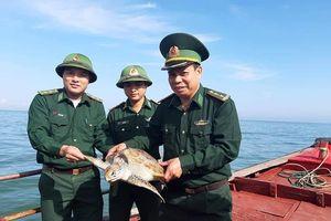 Hà Tĩnh: Rùa biển 15kg quý hiếm mắc lưới ngư dân