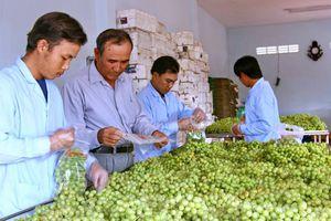 Bộ Công Thương nói gì về tình trạng nông sản ngoại 'đội lốt' hàng Việt?