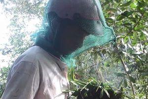 Cận cảnh 'vua lấy mật ong' kiếm tiền triệu mỗi ngày