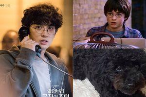Fan, đồng nghiệp nói về tạo hình của Chanyeol (EXO) trong 'Memories of the Alhambra'