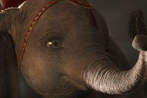 Disney công bố trailer phim live-action 'Dumbo - Chú voi biết bay': Hoàn hảo hơn những gì fan tưởng tượng