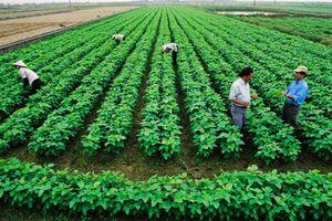 Miễn, giảm thuế đất nông nghiệp: Nhiều đối tượng hưởng lợi