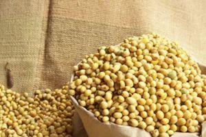 Mỹ muốn xuất khẩu 3.000 tấn đậu khô vào Việt Nam trong năm 2019